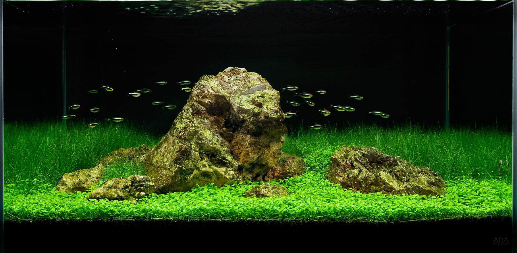 A Tranquil Aquascape in the ADA 90-P