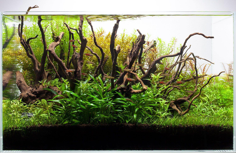 1r60cm_planted_aquarium_tank