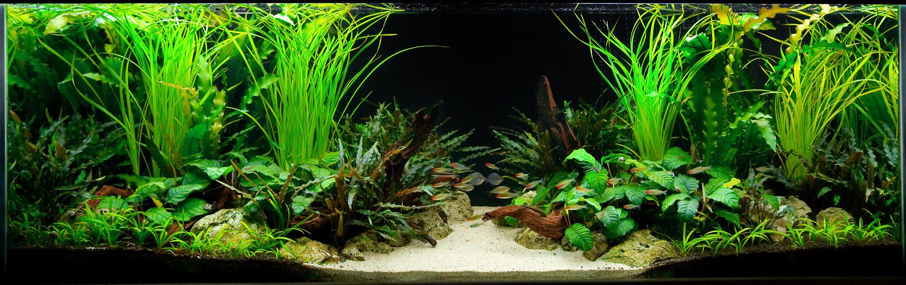 A Two-Sided Live Planted Aquarium Layout