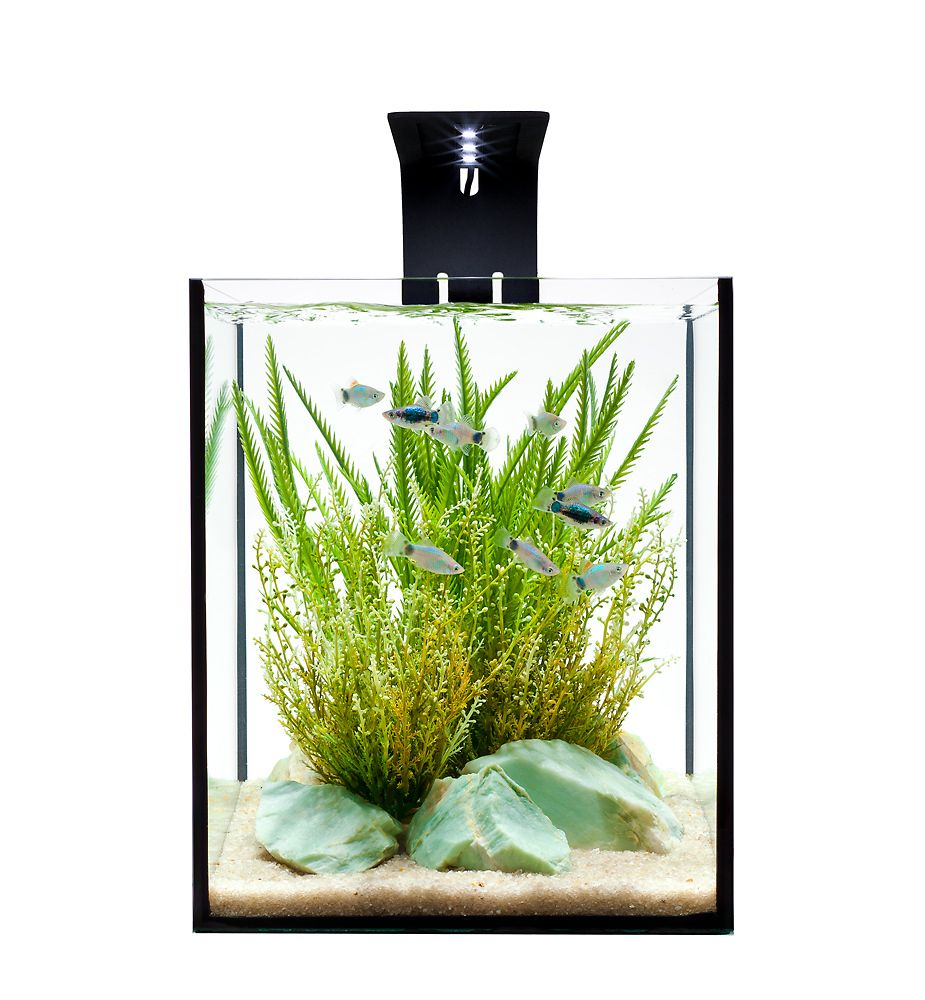 Effective Aquascape Design in a Desktop Aquarium