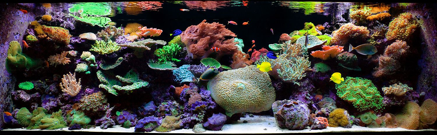 A Large Panoramic Reef Aquarium