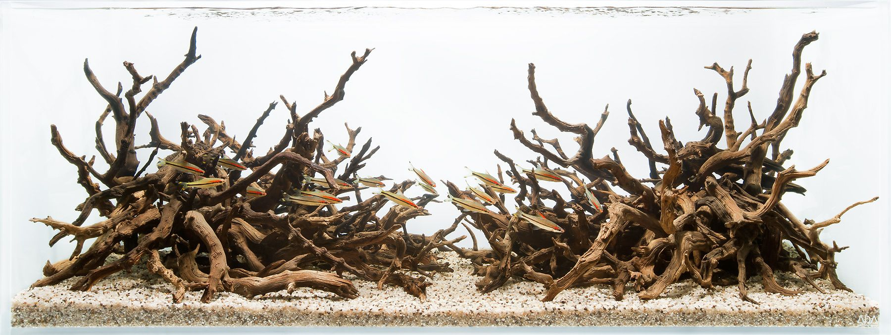 Tanglerose- A Hardscape for Roseline Sharks