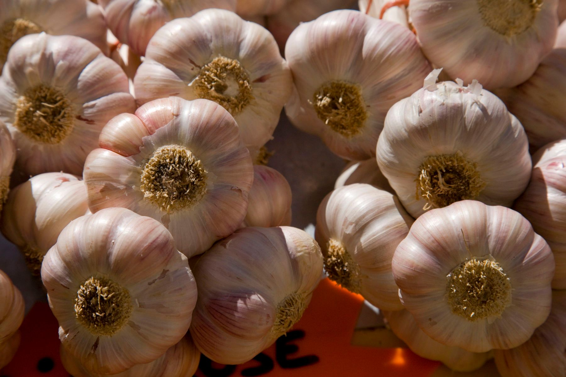 1r5456_gordesmarketgarlic_2j8z1768