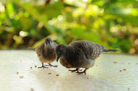 2018-Website_Birds.jpg