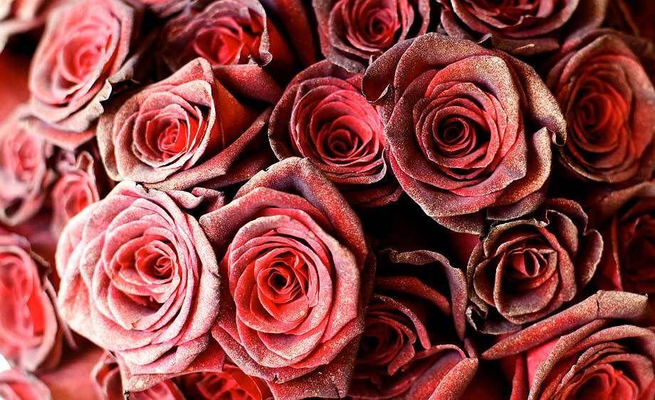 Red roses with gold paint at the Inn at Rancho Santa Fe.