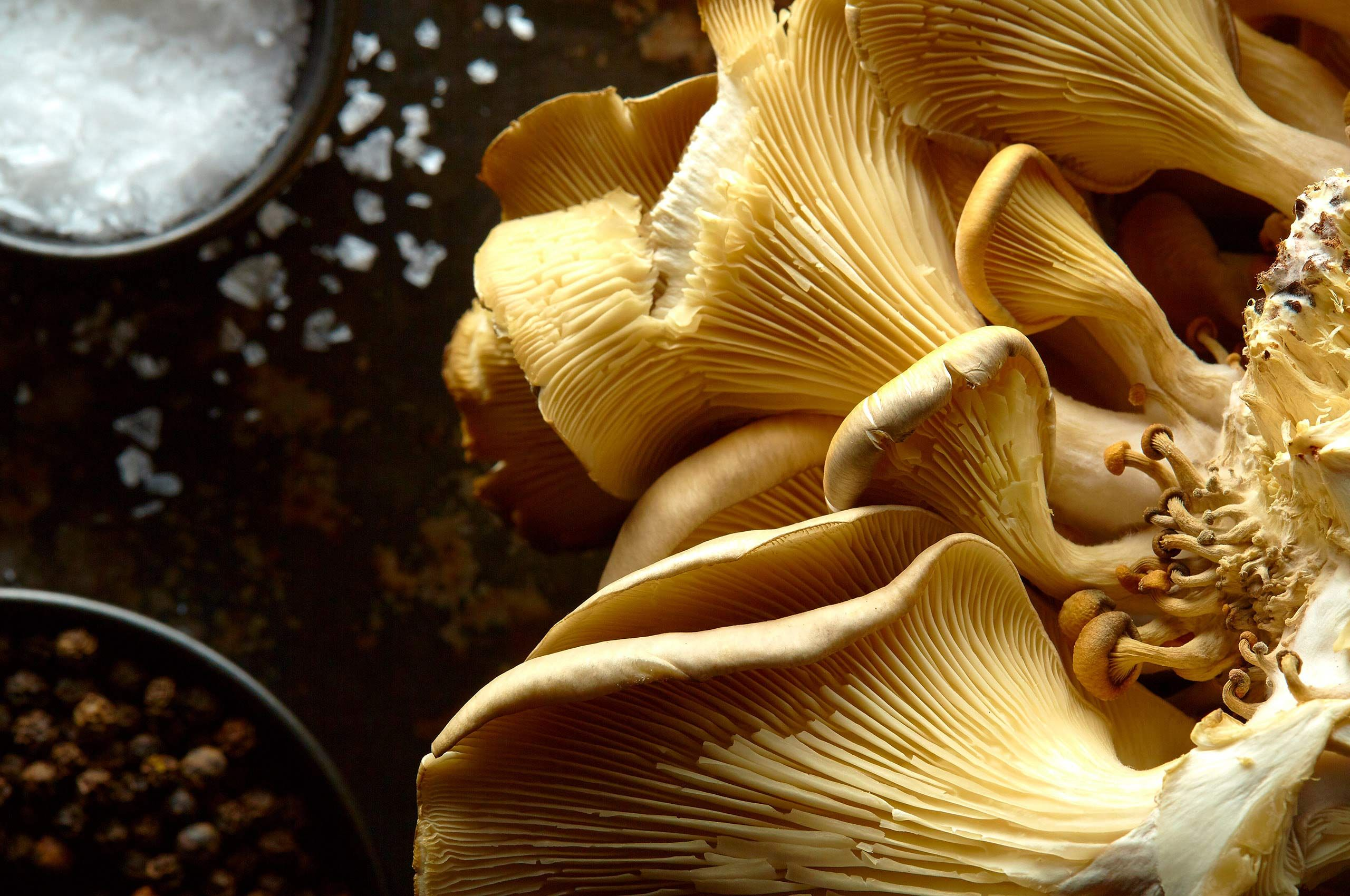 oyster-mushrooms.jpg