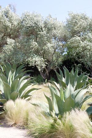 Sonoma Gardens
