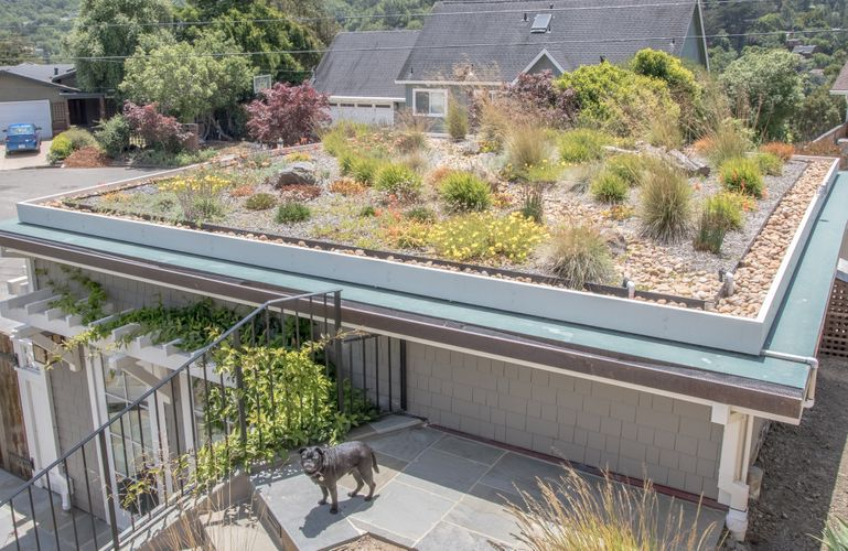 Living roof with dog