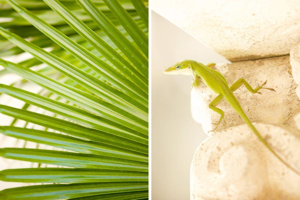 Detail_lizard_plant