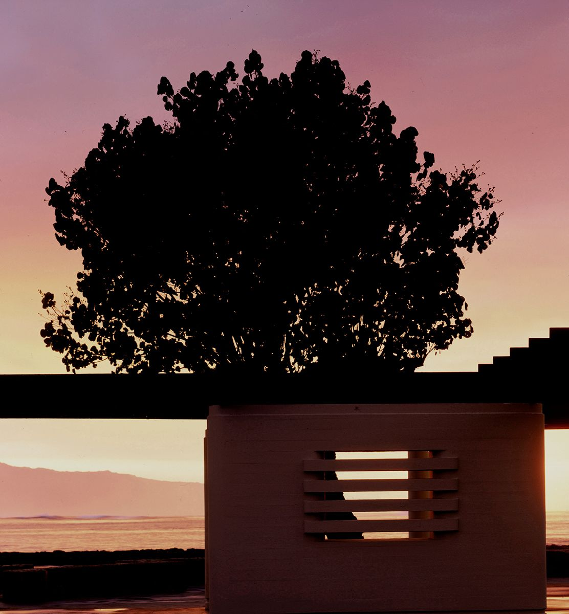 Tree_wall_ocean.sunset_hawaii
