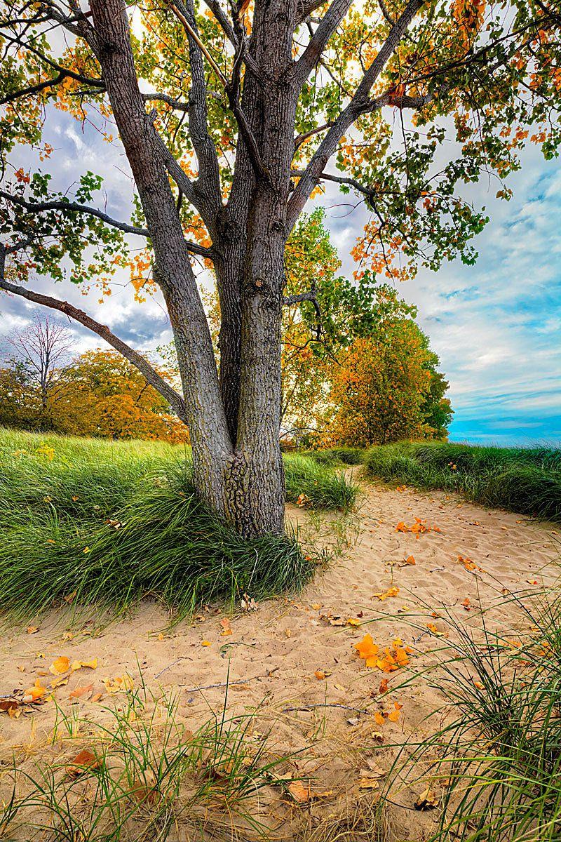 1tree_grass_gilson_park_sharpen