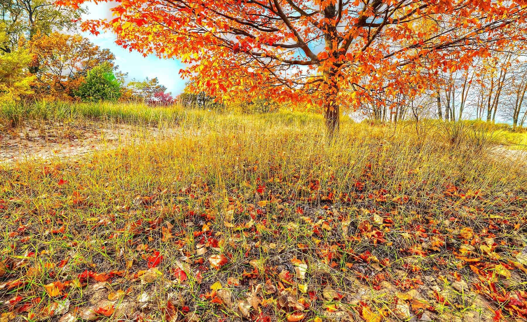 1gilson_park_late_fall_sharpen