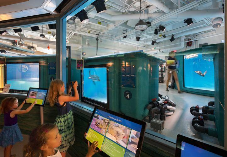 PGAV Destinations  /  Sea Turtle Recovery,  South Carolina Aquarium, Charleston