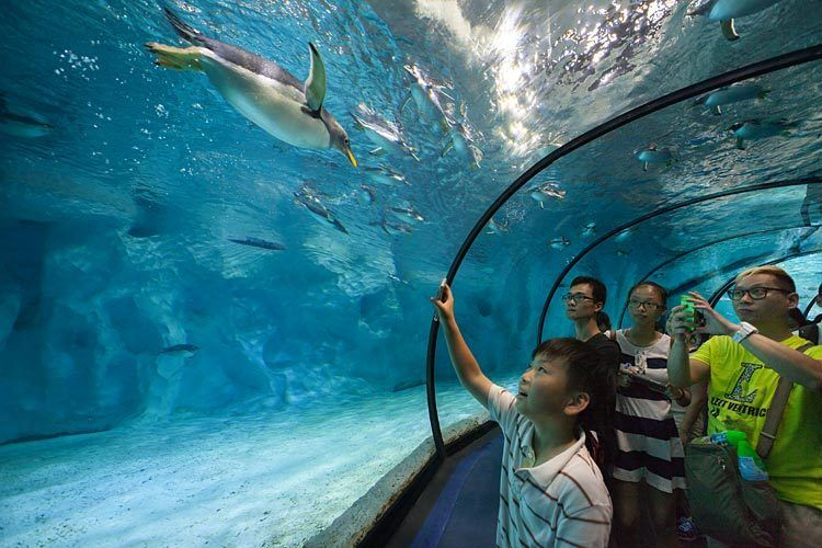 PGAV  /  Chimelong Ocean Kingdom,  China