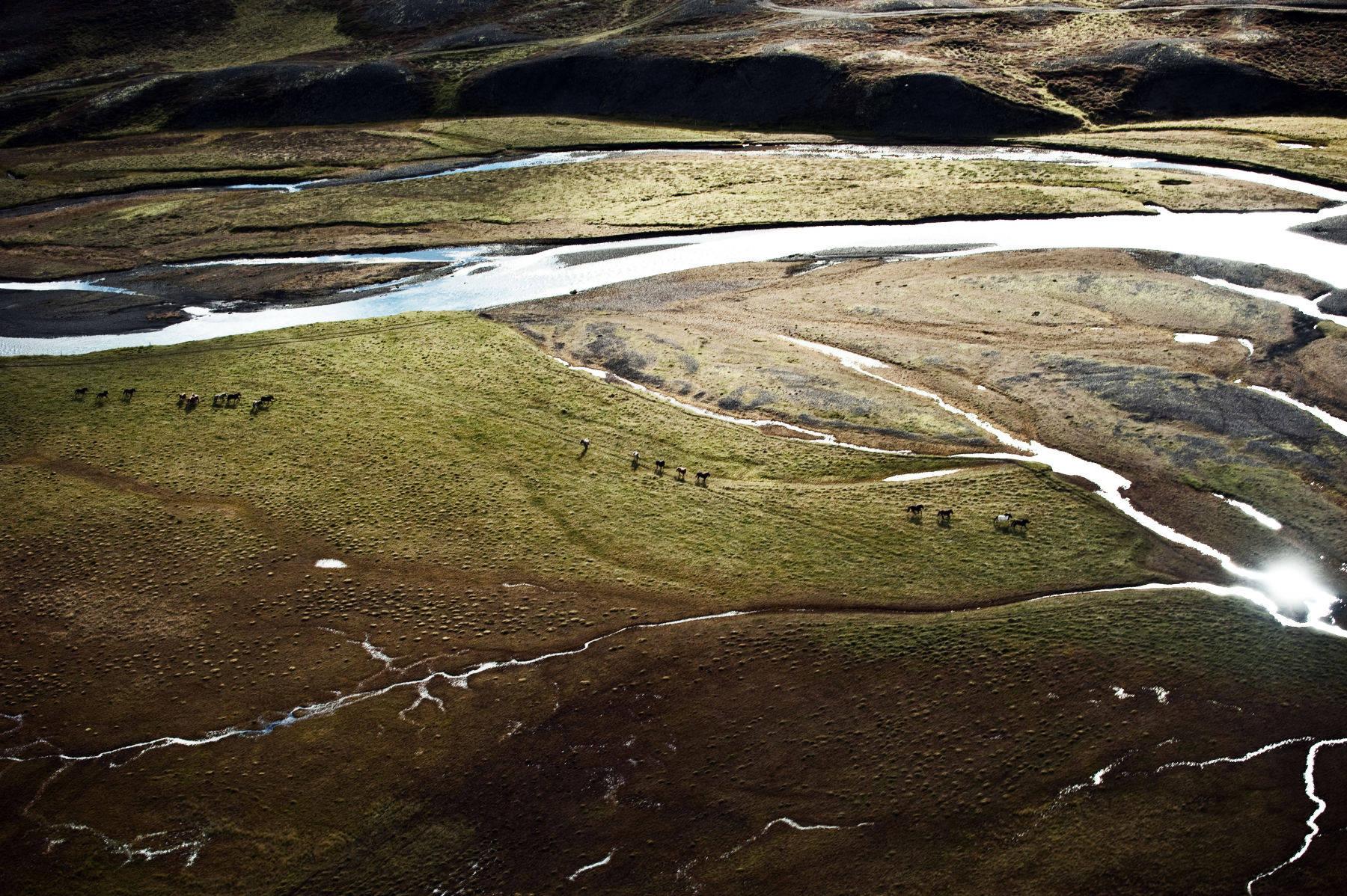 1paultaggart_herd_in_iceland_0006.jpg