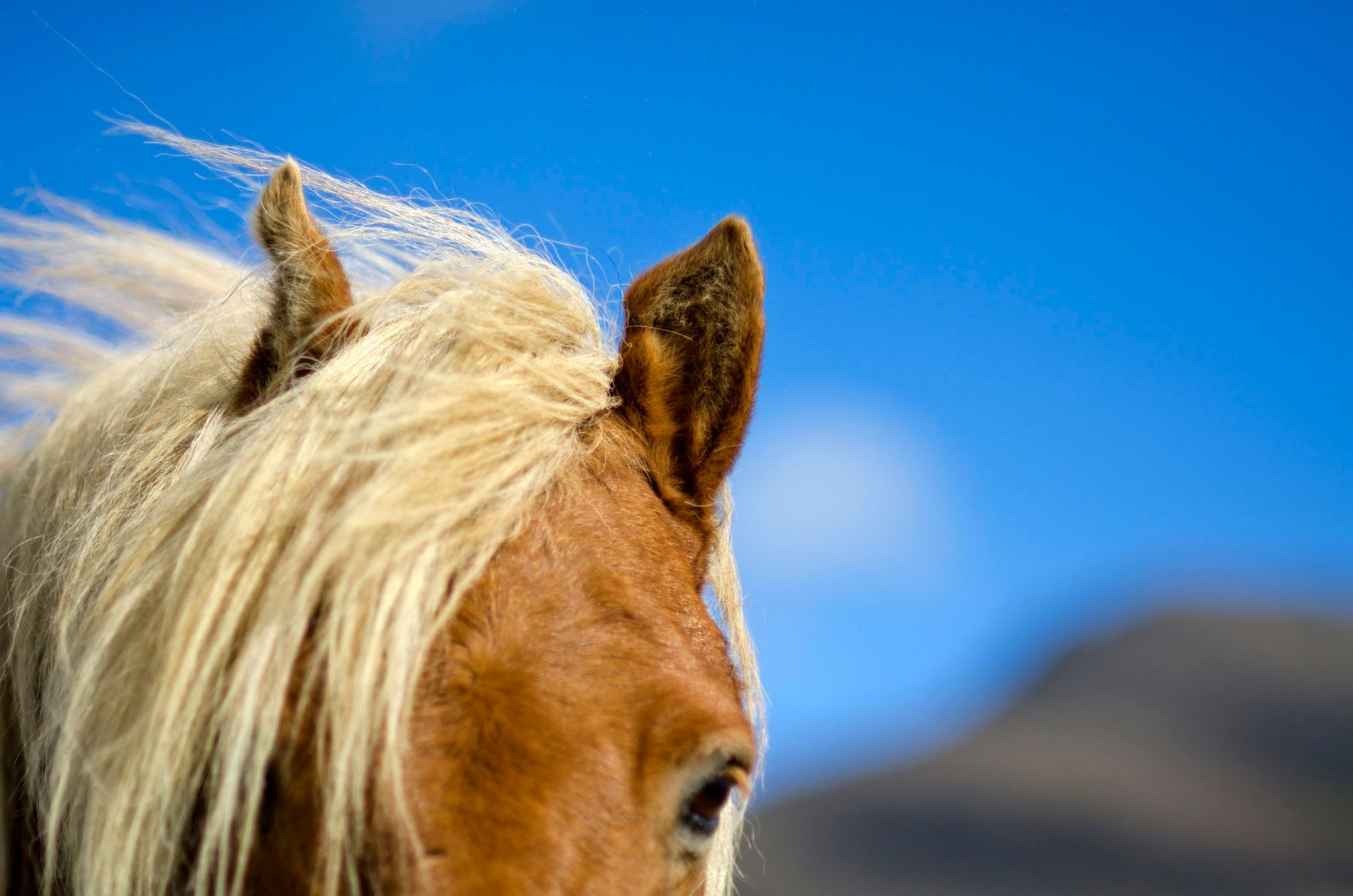 1lindsayblatt_herd_in_iceland_0069.jpg