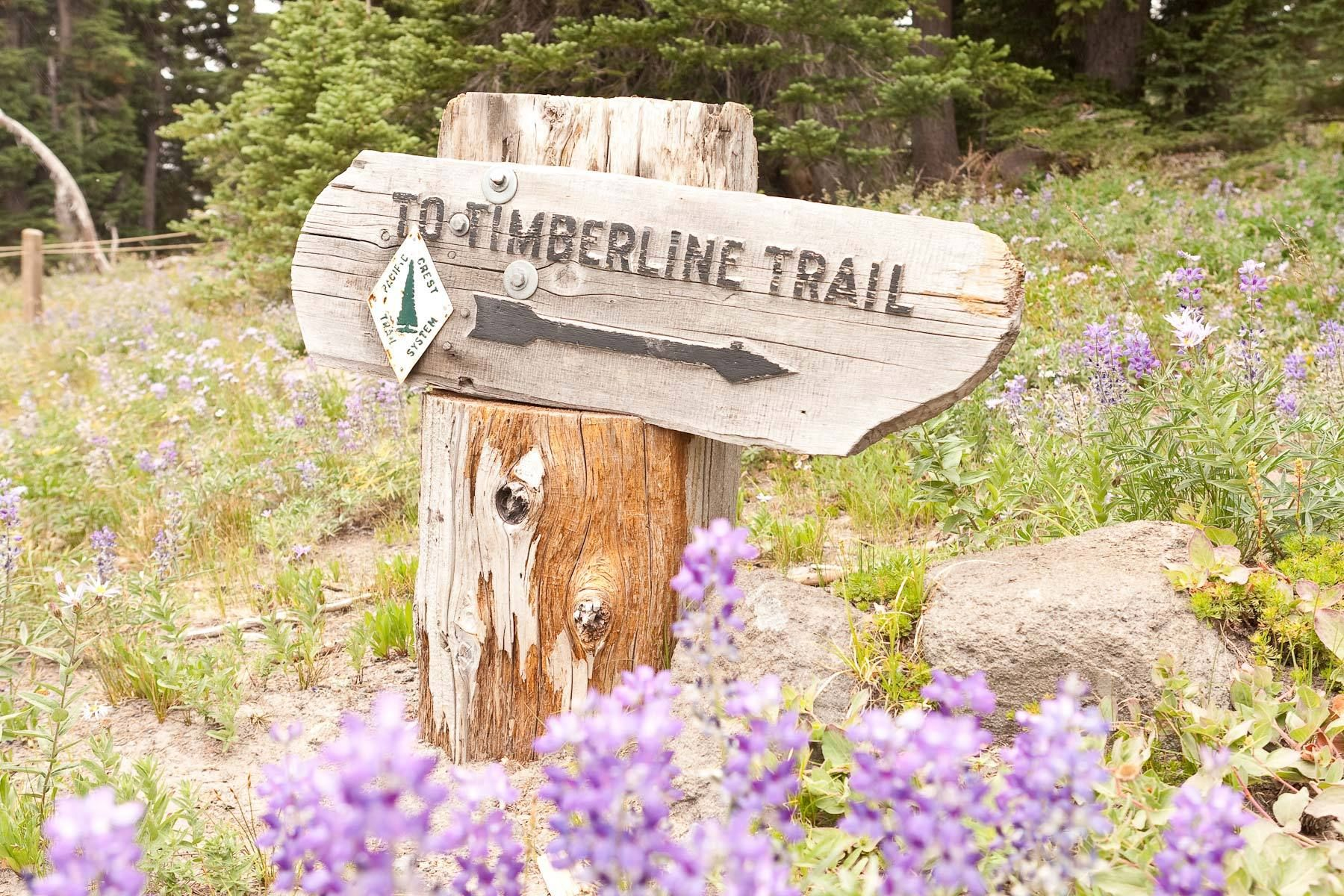 1timberline_trail.jpg