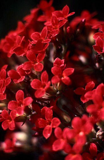 1micro_flower_negril.jpg