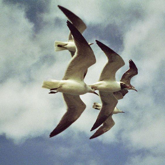 1sea_birds_off_cancun_mexico.jpg