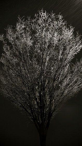 1p1020325snow_tree_.jpg