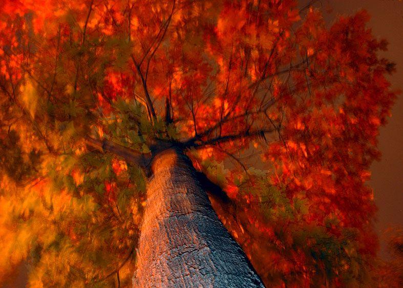 1fire_tree_newark__2.jpg