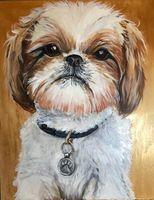 Shitzu dog portrait