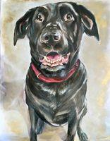 Chocolate lab dog portrait