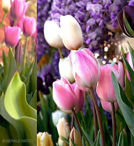 Spring Flower Montage
