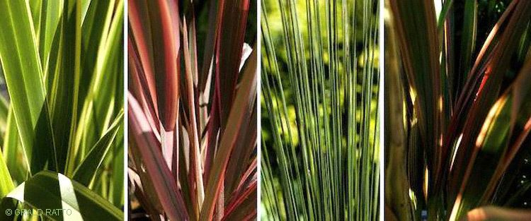 Four Panel Bladed Grasses