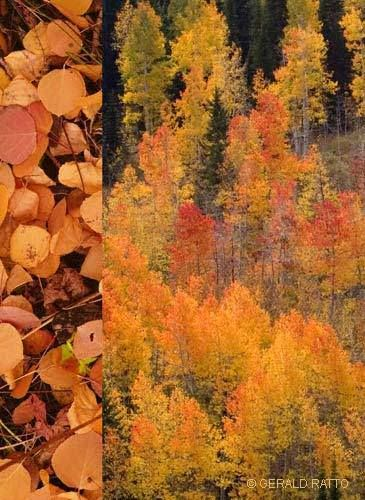 Fall Color Montage