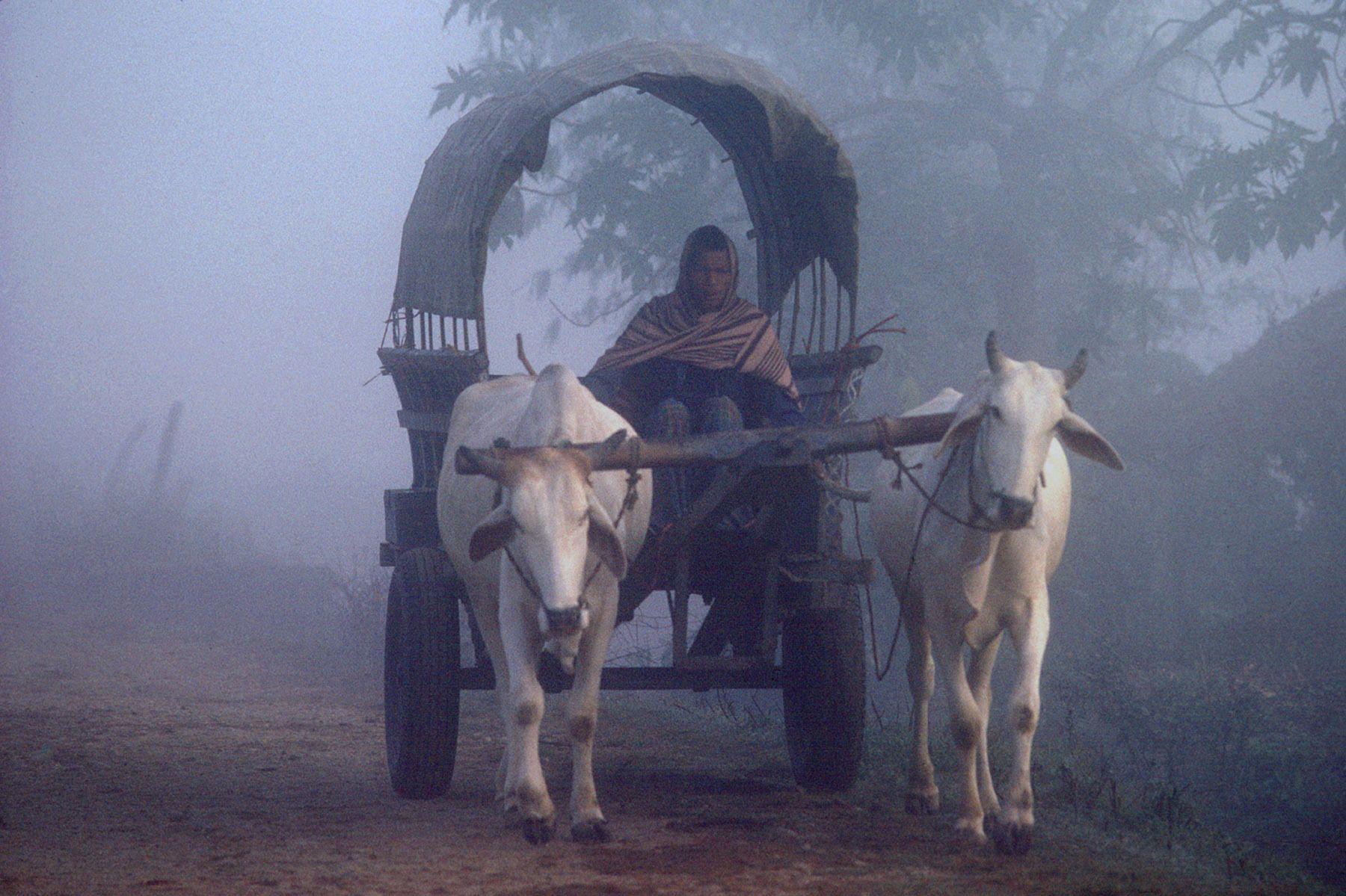 Bullock Cart. Nepal