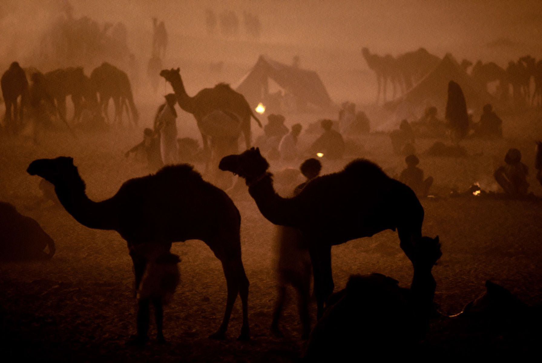 Camel Camp. Thar Desert. Rajasthan, India.