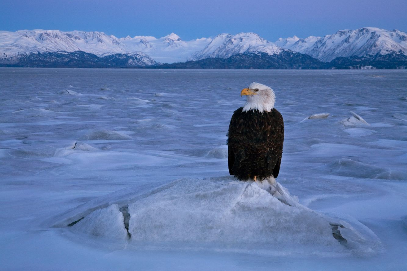 The Sentinel. Kenai Peninsula. Alaska.