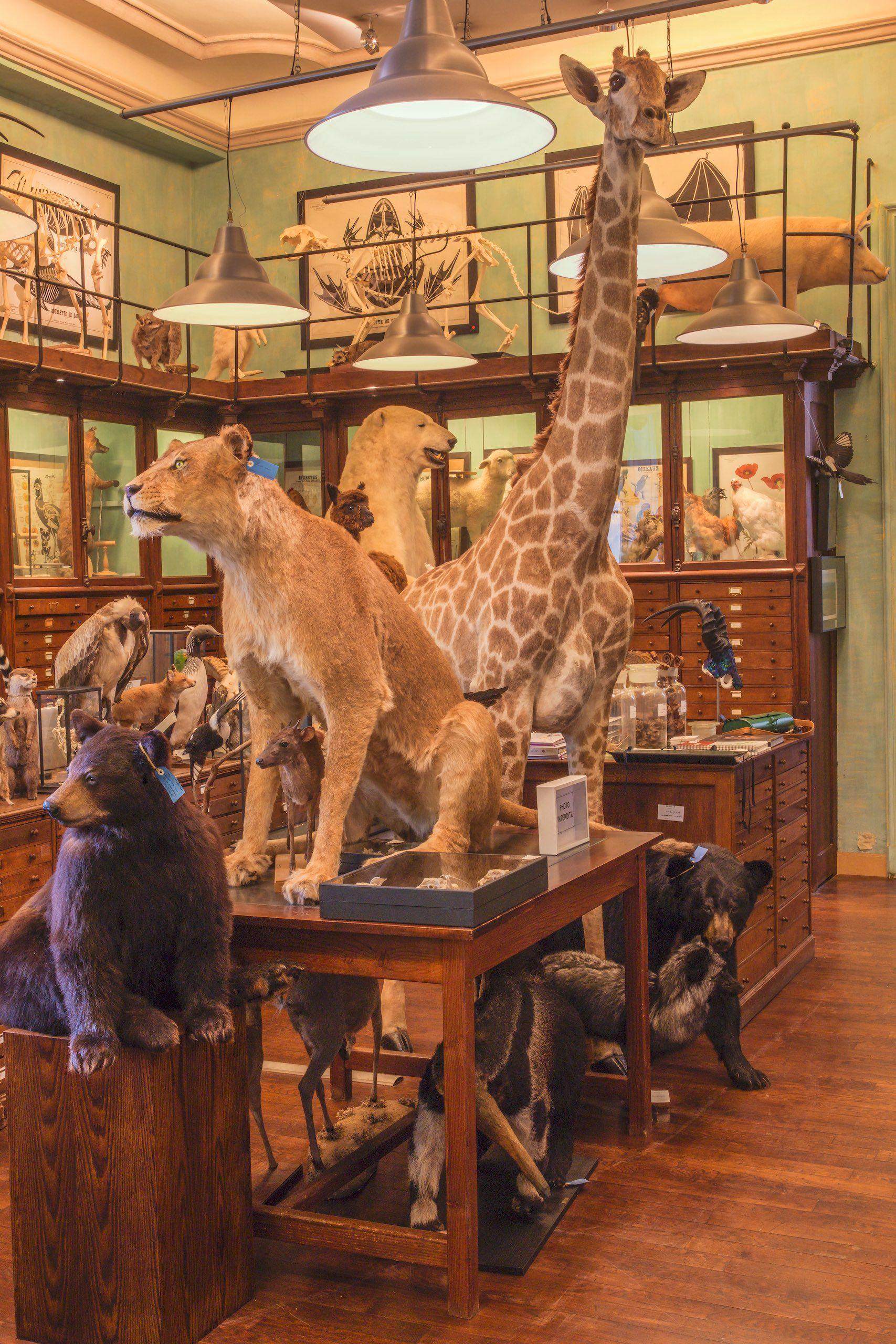 ANIMAL SALON #2