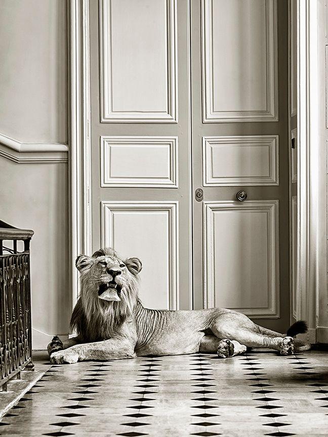 DEYROLLE MALE LION RECLINING