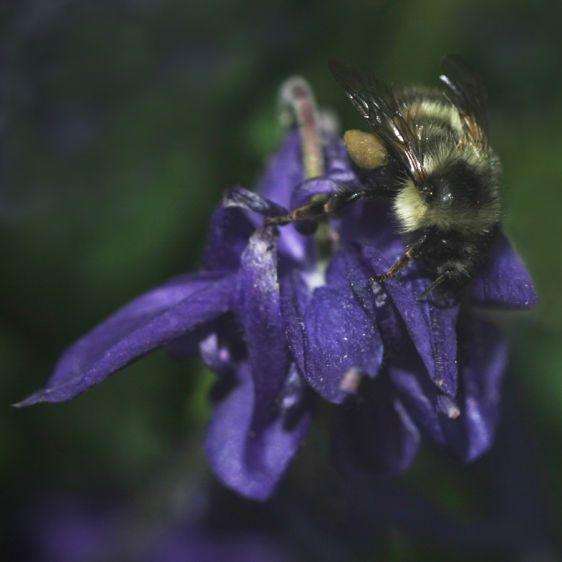 1Erin_sBee__Purple_Flower_sm