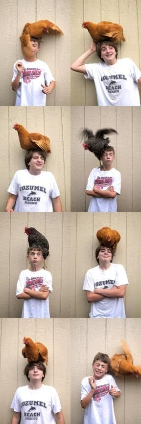 HALDO boys and chickens