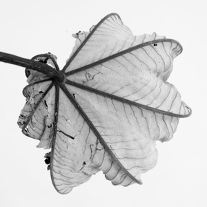 dried leaves CR_ 304_preview.jpeg