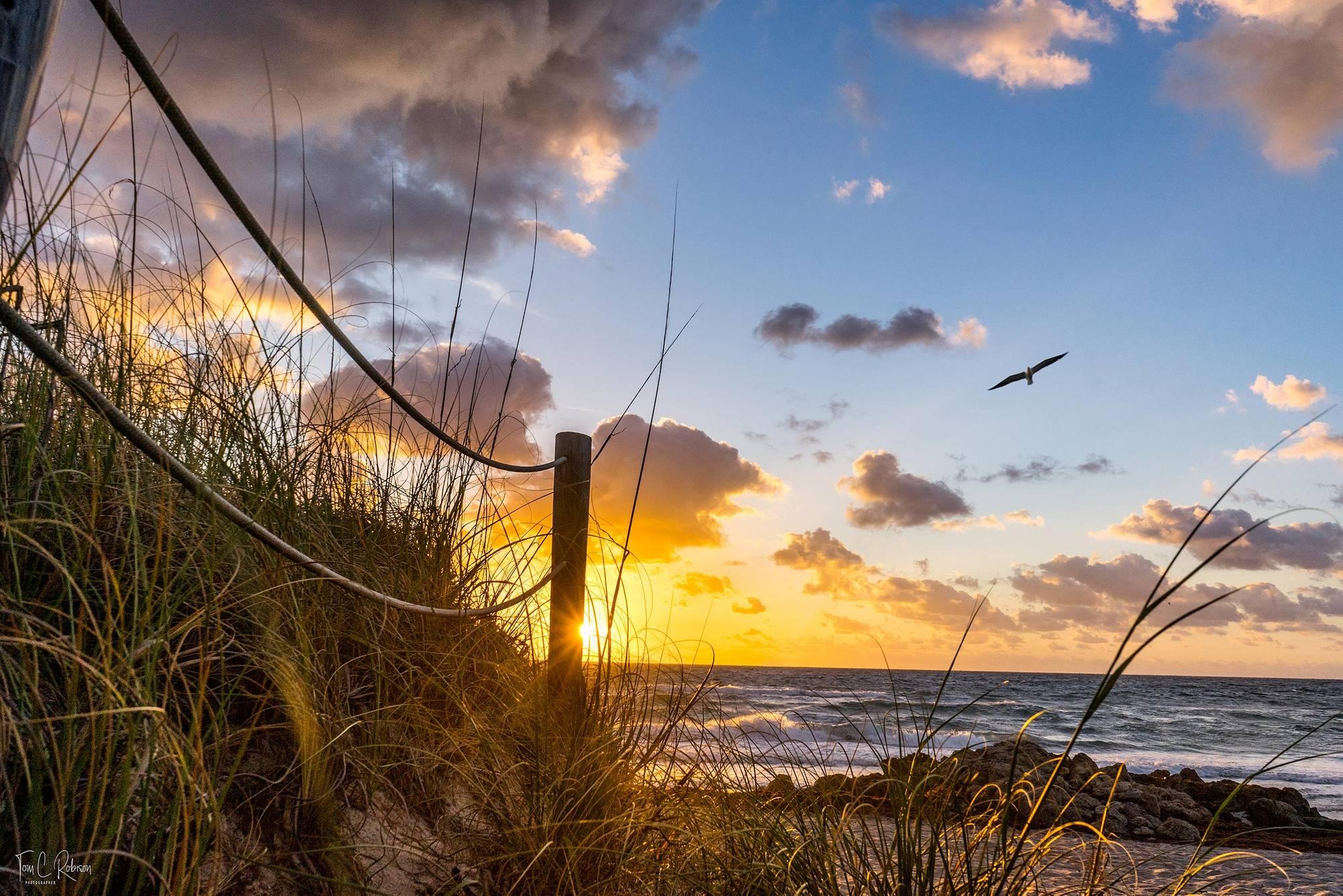 beach-SRGB-00848-1bird-Final-w-sig.jpg