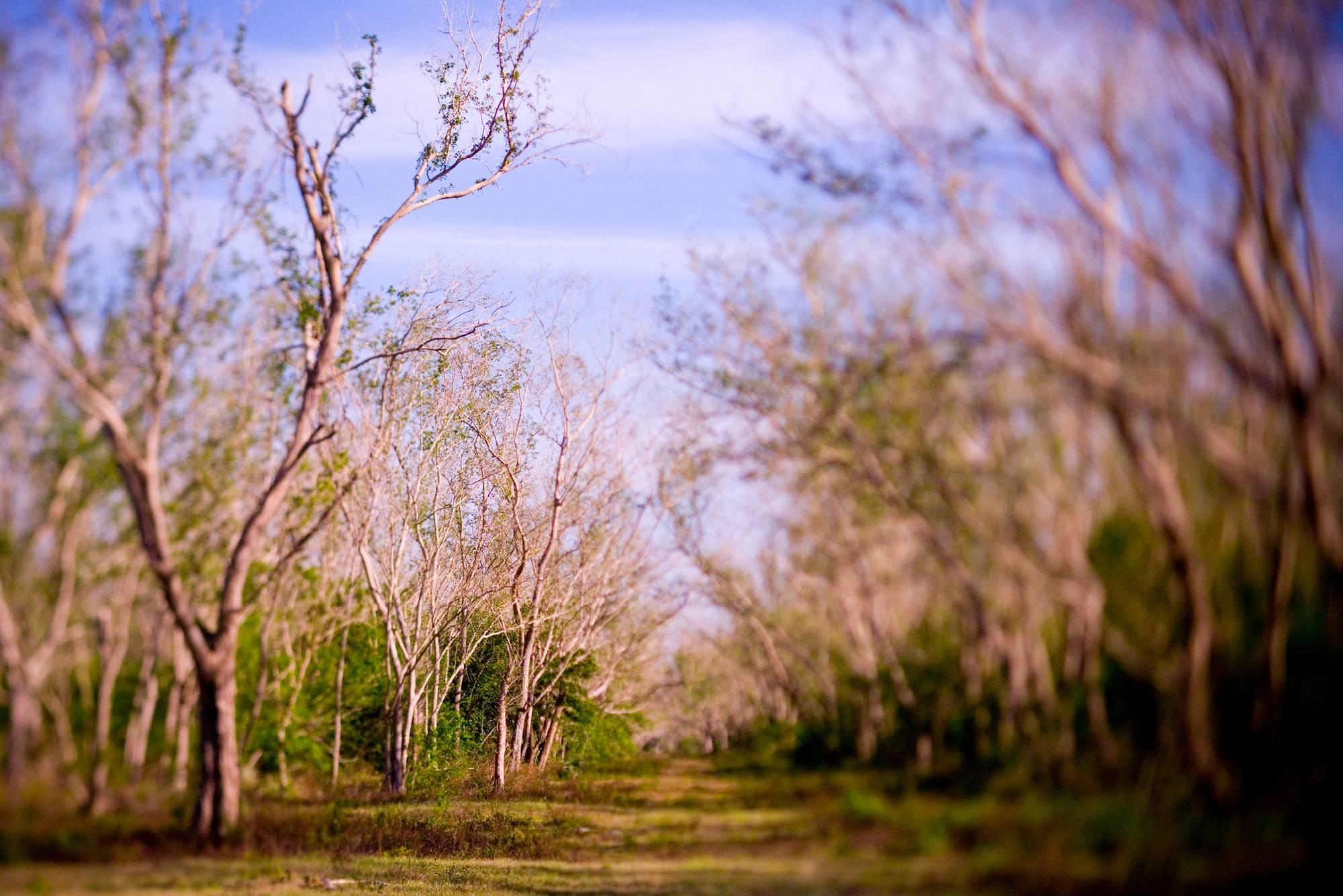 RiverTrees0003.jpg