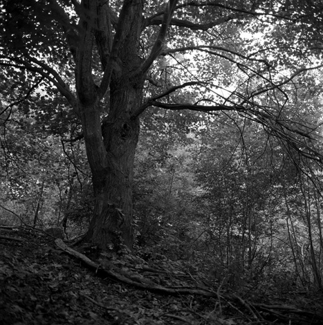 1northport_foliage7_web