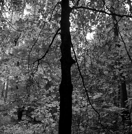 1trees_hass2_crop_web