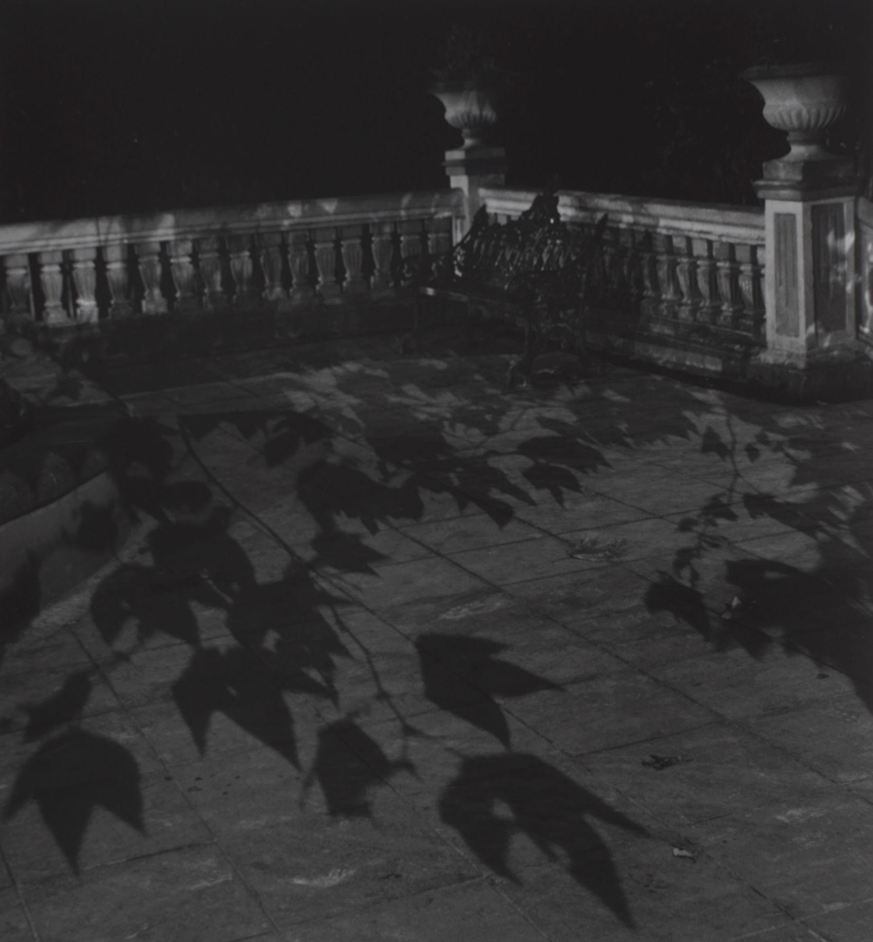 Leaf Shadow, Jalapa