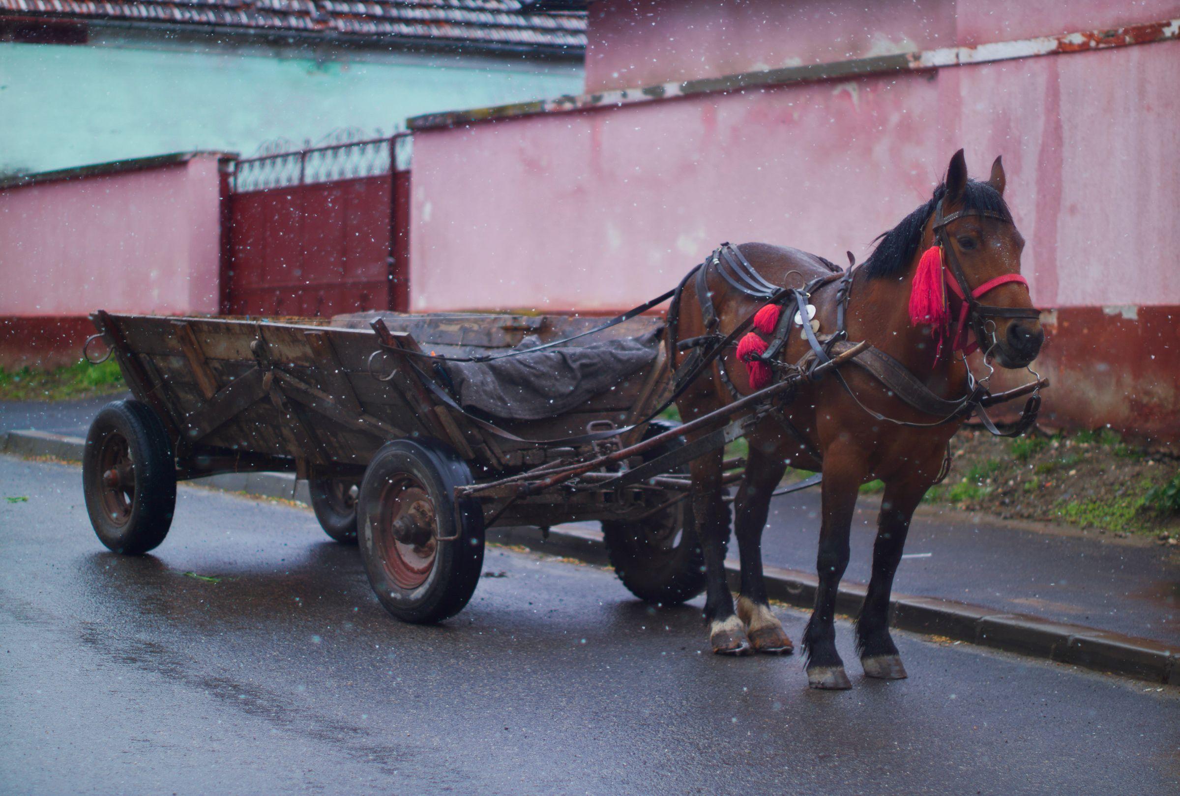Manea Horse and Cart