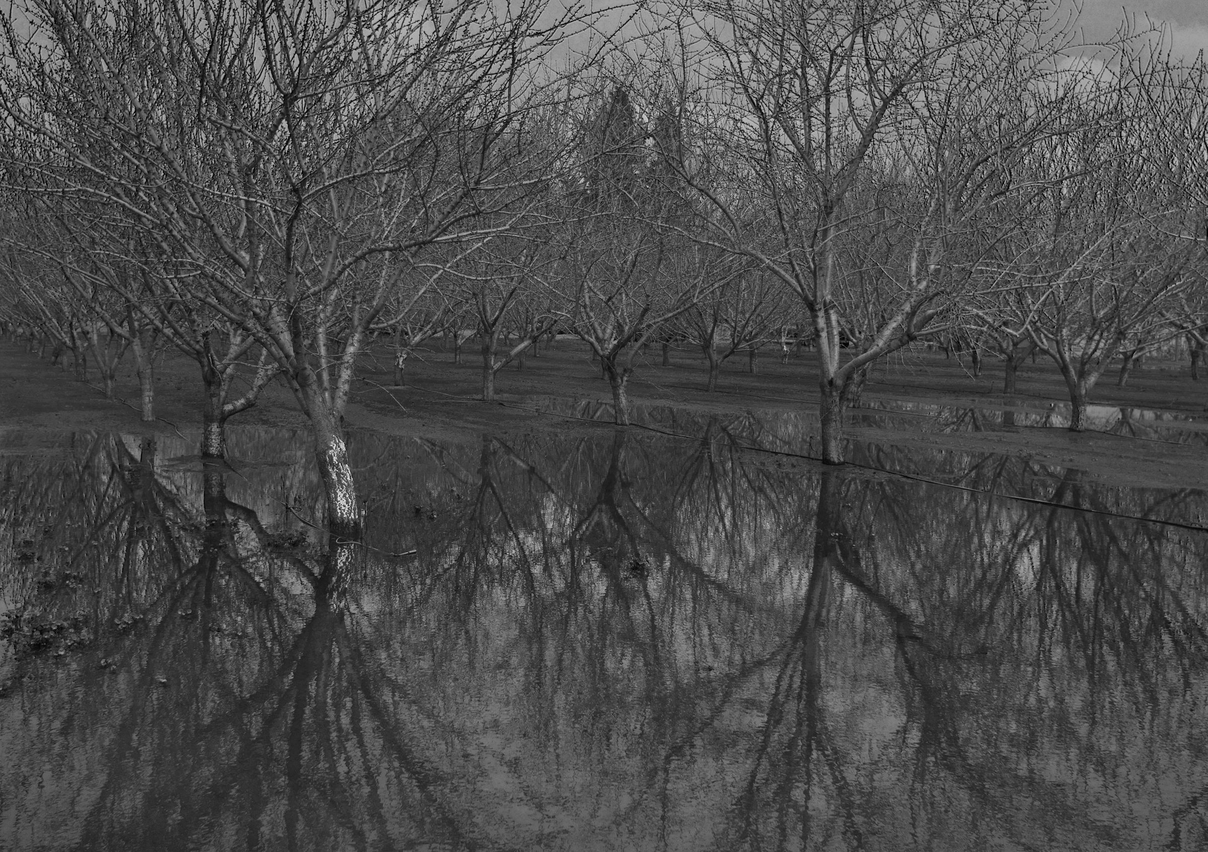 Drowned Trees, Central California