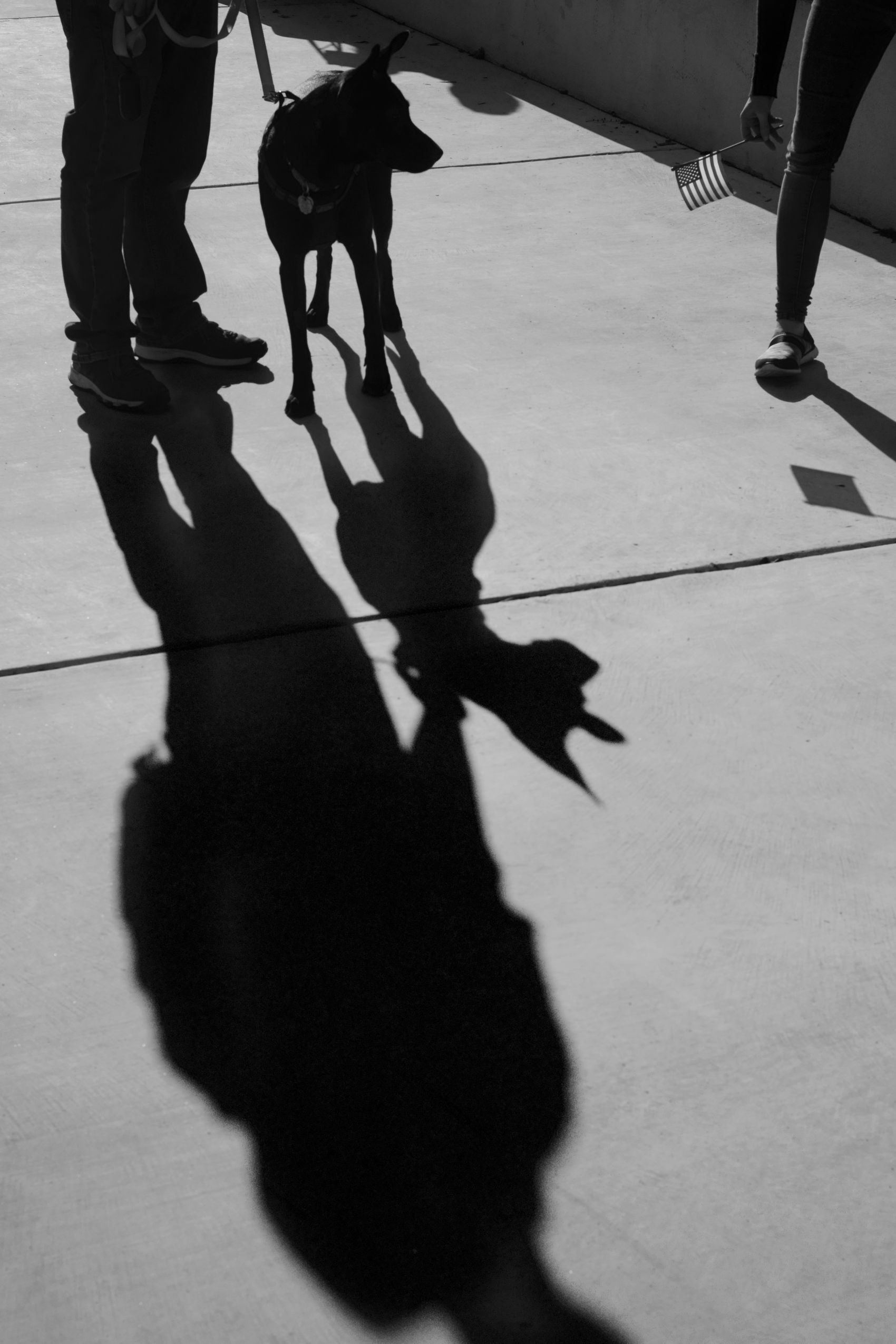 Shepard Shadow