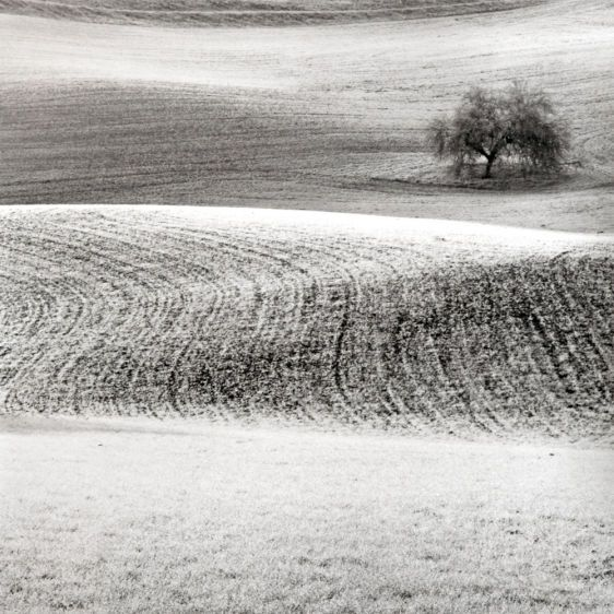 Winter_Field