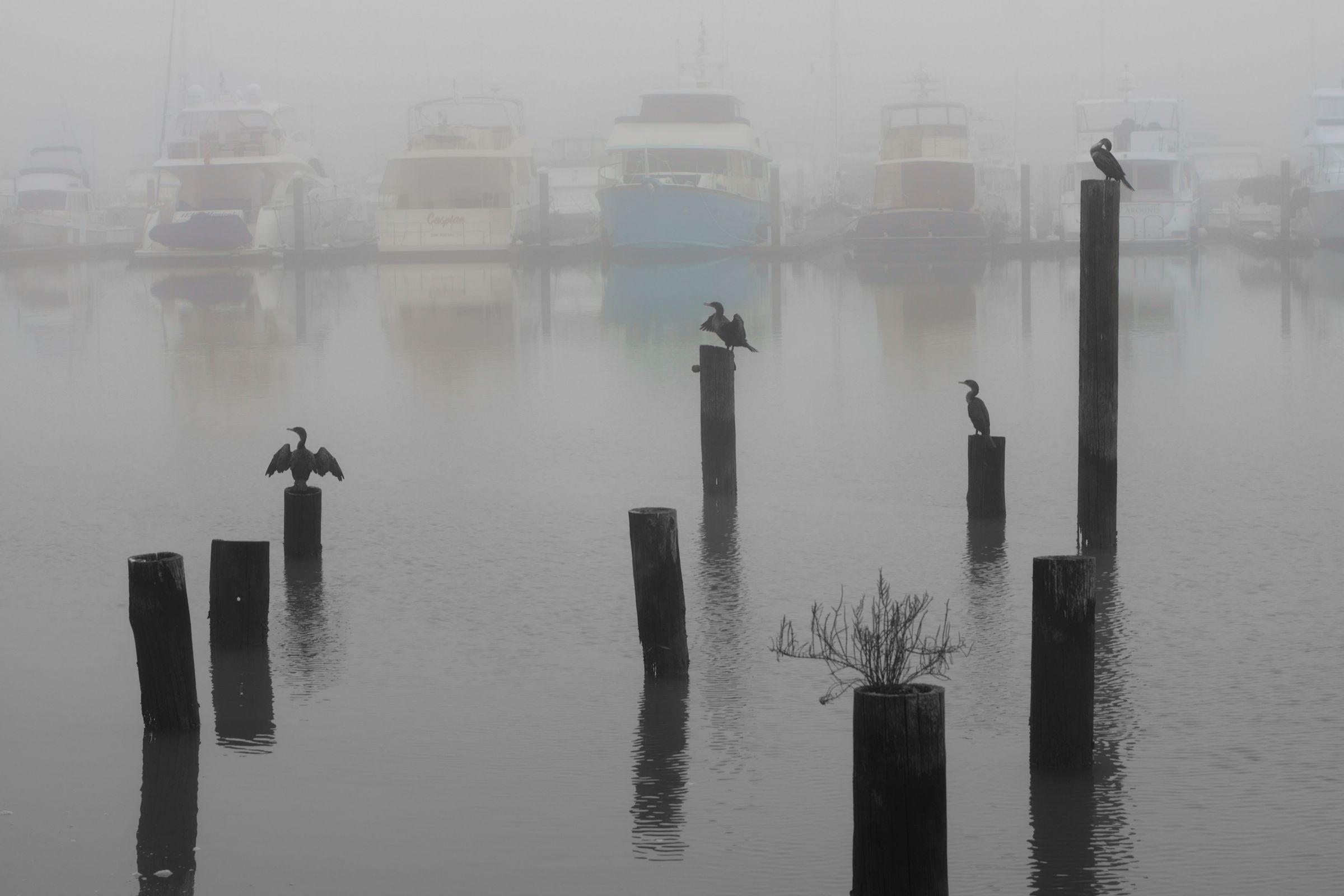 For the Birds, Marin, California