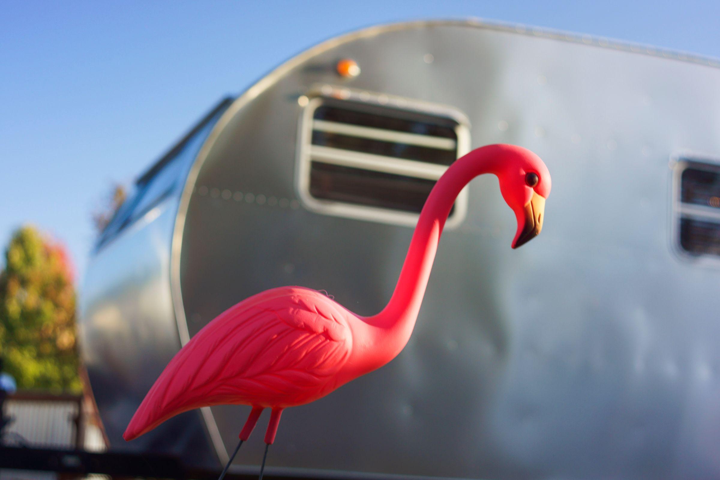 One Flamingo,  Oregon