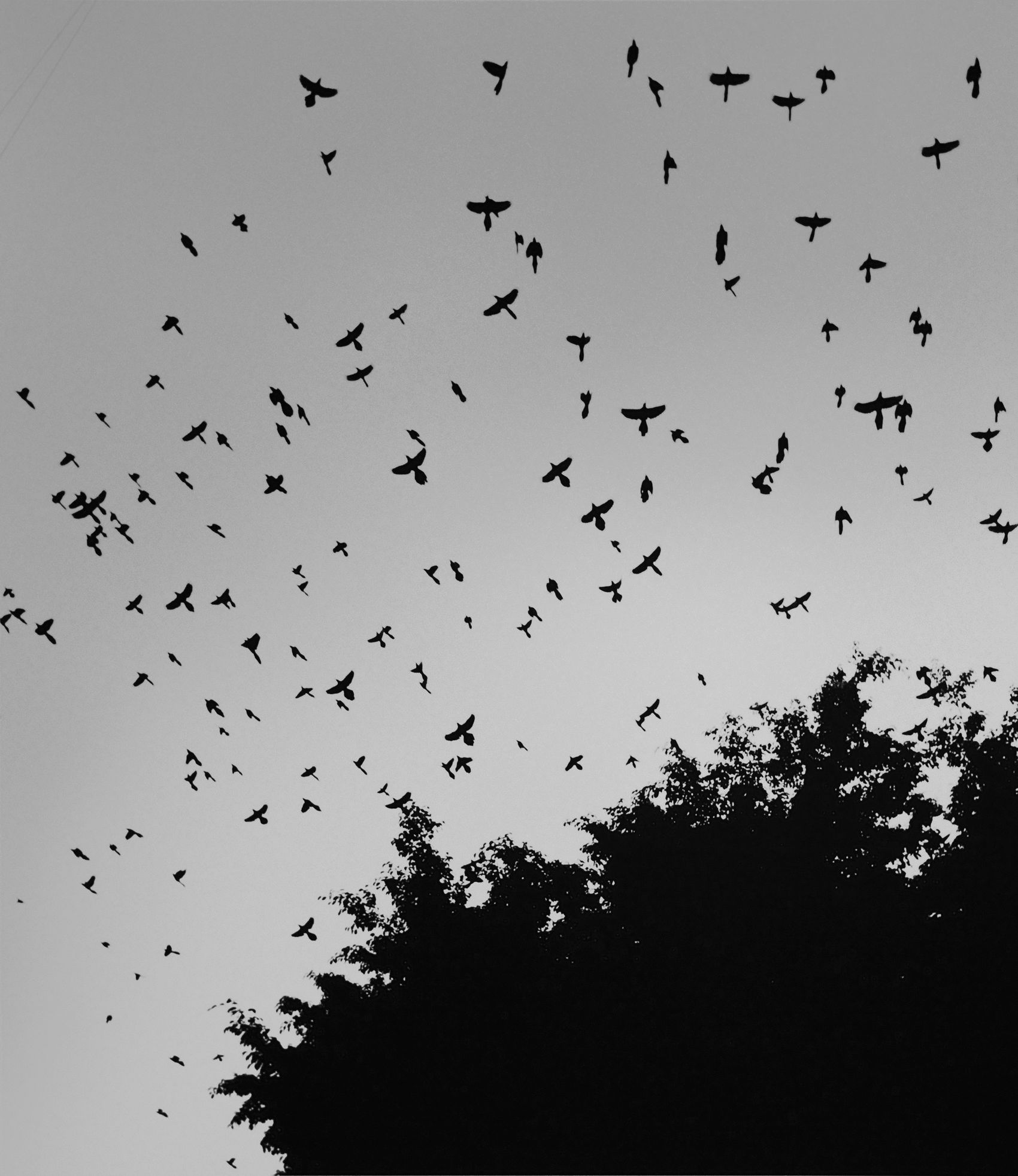 Cacophony of Birds